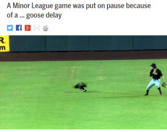 マイナーリーグの試合にガチョウが乱入(画像はサイトのスクリーンショットです)