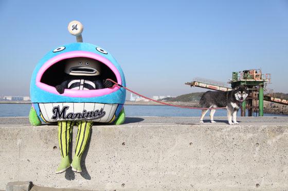 犬と戯れる「謎の魚」【写真提供:千葉ロッテマリーンズ】