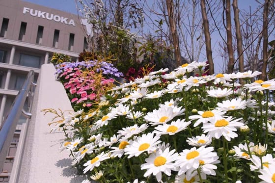 ソフトバンクは福岡移転30周年を記念してヤフオクドーム外部のガーデン化を実施【写真:藤浦一都】