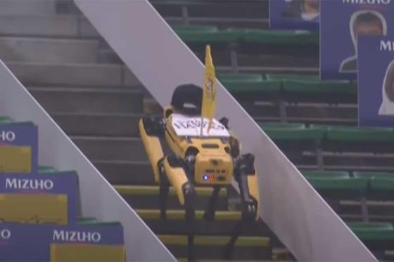 階段を上下する四足歩行型ロボット「spot」【画像:パーソル パ・リーグTV】