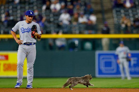 8回のロッキーズ攻撃中にネコがグラウンドに乱入した【写真:Getty Images】