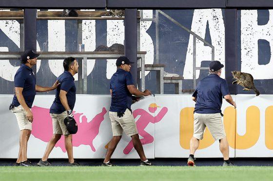 """メジャーリーグの球場に現れる""""乱入者""""には球場スタッフも翻弄される【写真:Getty Images】"""